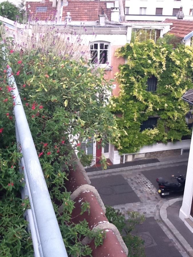 Rooftop Volubilis 2